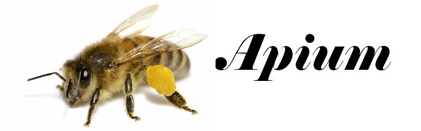 Apium